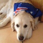 honey with aussie flag