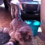 chester Pet Minding