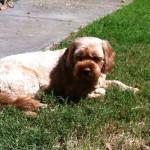Peppa in sun