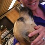 honey the staffy and me