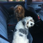 Peppa and Oscar on their to the groomers, Pet Transport