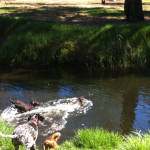 Fun in the park with a great group of dogs