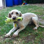 Gracie with her favorate toy