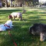 Chico, Charlie and Peppa at the park