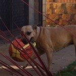 Honey with ber favorate ball