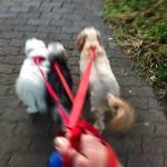 Chico, Charlie and Peppa