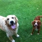 Rosie and Poppie